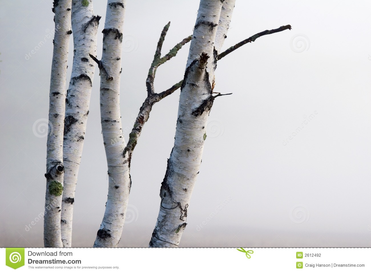 Birch trees in the winter stock photo image 2170700 - Birch Trees In The Fog Stock Photography