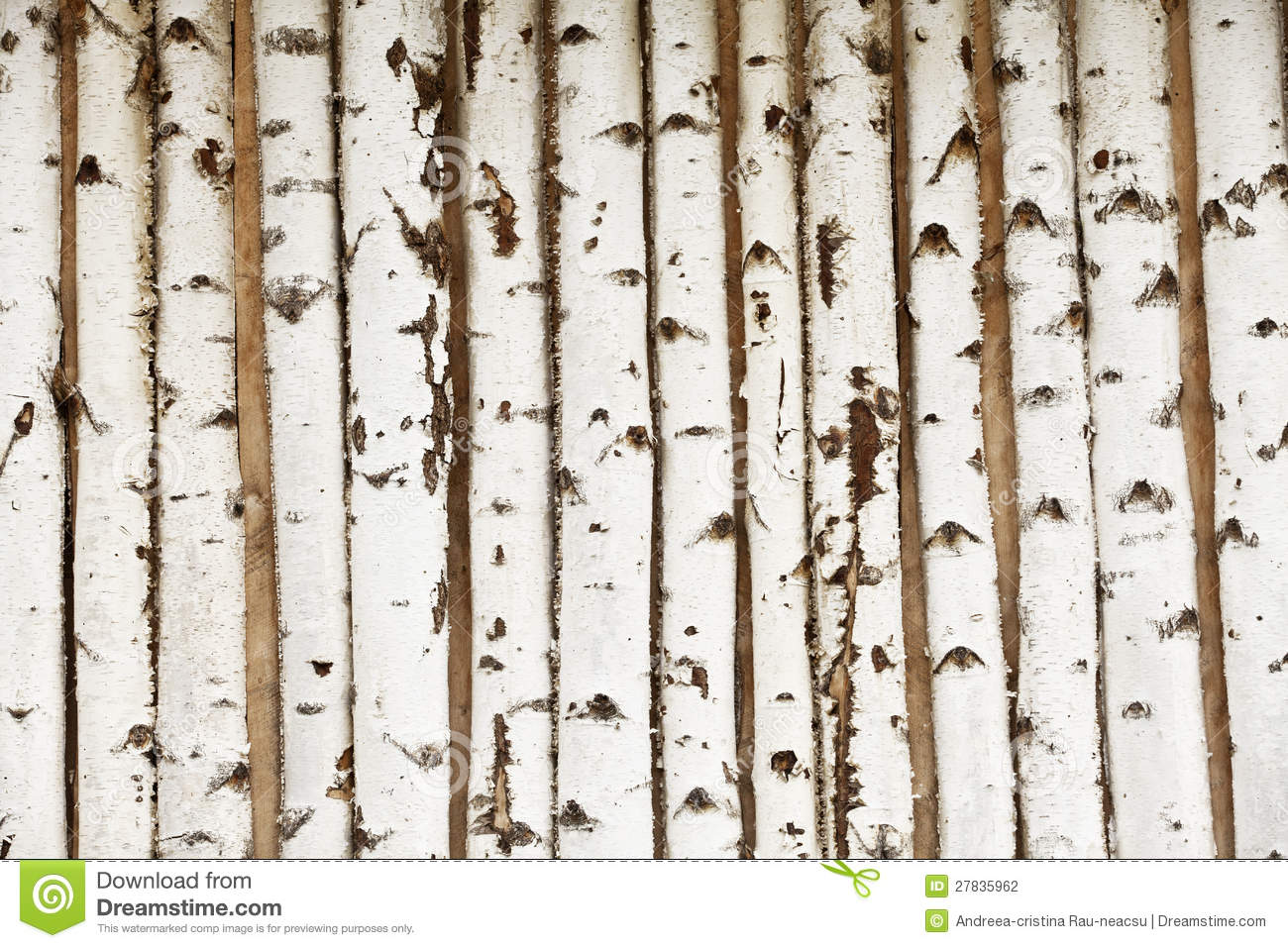 Birch Wood Texture Stock Photography Image 27835962