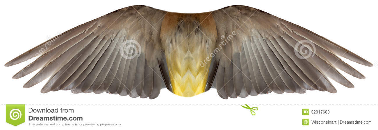 Bird or Angel Feather Wings Isolated