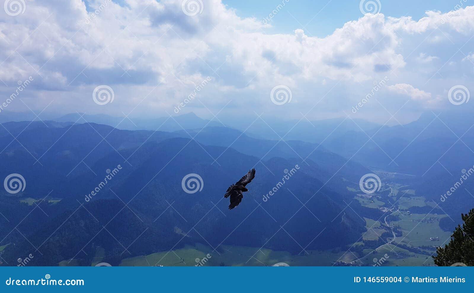Bird between the big mountains