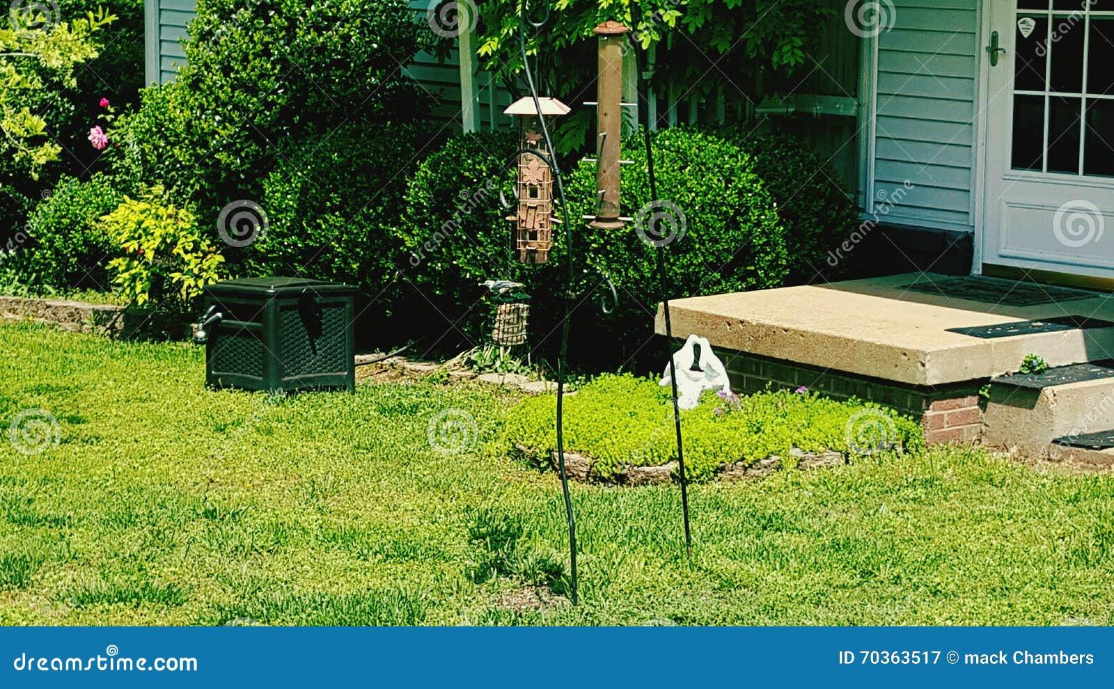 bird on bird feeder in front yard stock photo image 70363517