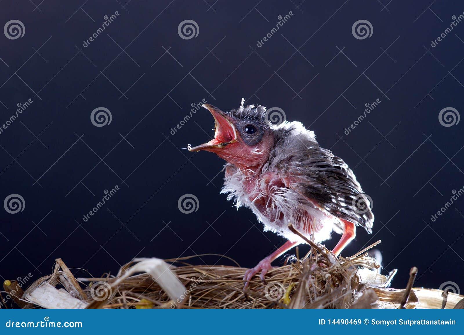 Bird black background