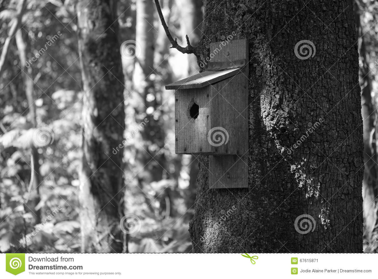 bird box on tree in woodland stock image image 67615871. Black Bedroom Furniture Sets. Home Design Ideas