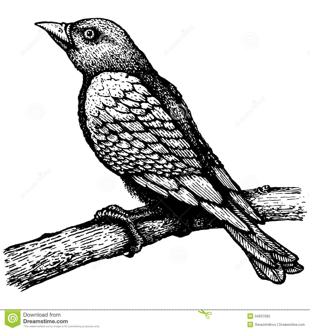 Black bird on branch drawing