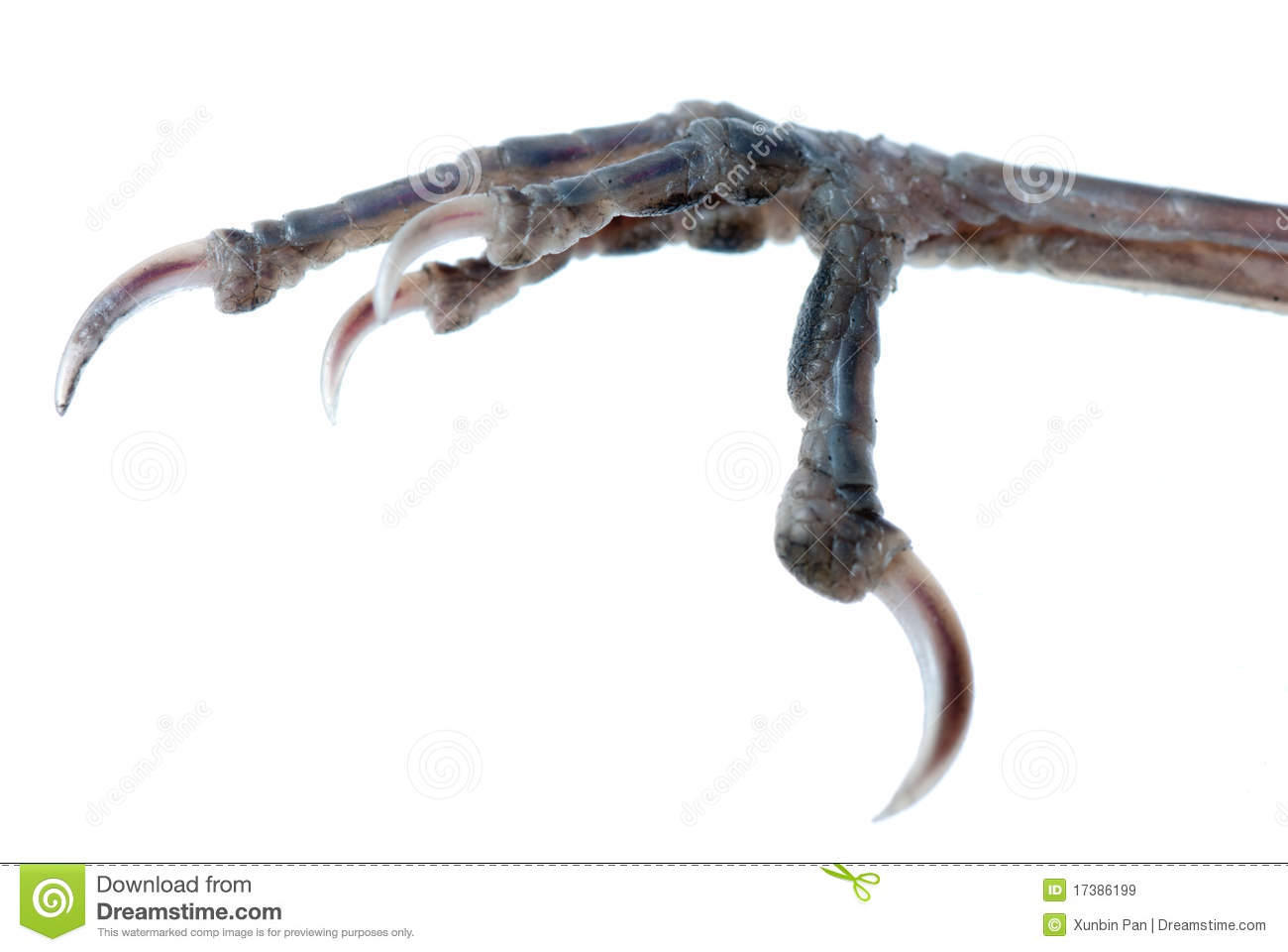 Bird Claw Isolated Royalty Free Stock Images - Image: 17386199