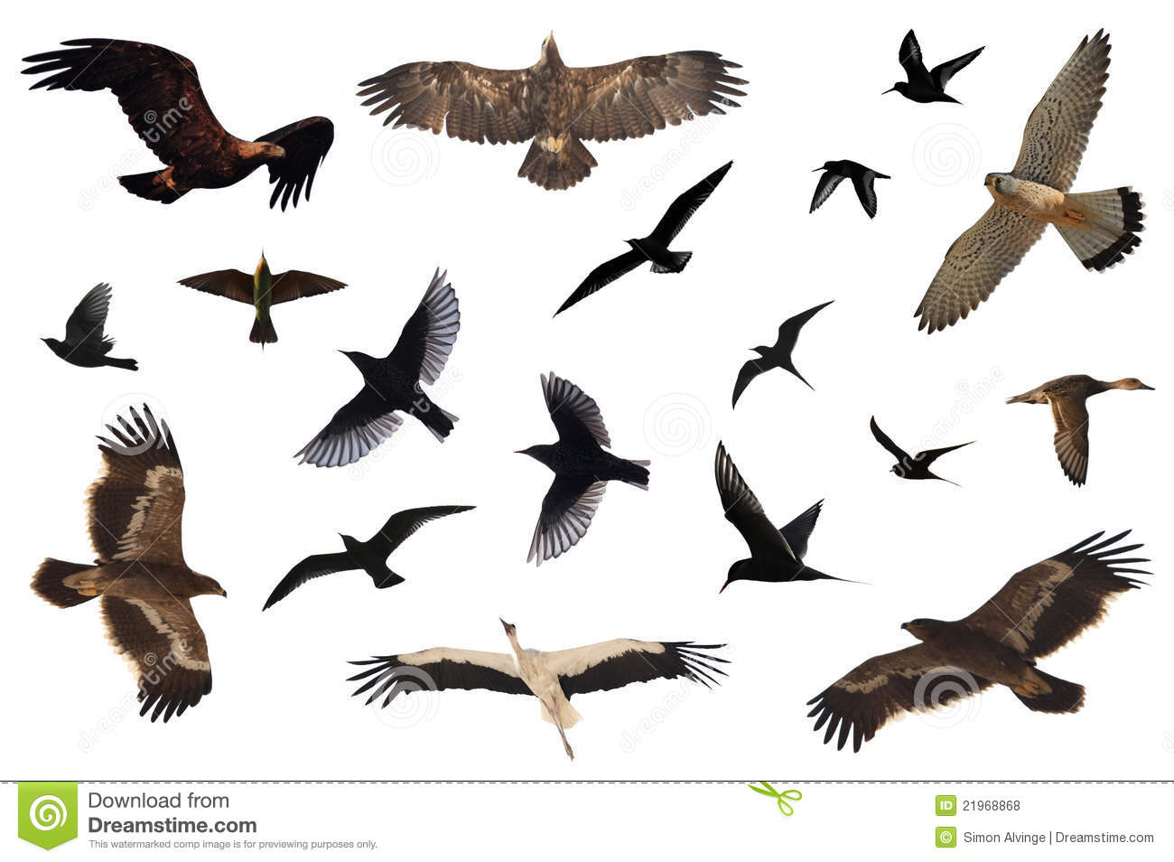 Flying Birds Free Stock Photos Download 3 416 Free Stock: Bird Collection Royalty Free Stock Photos
