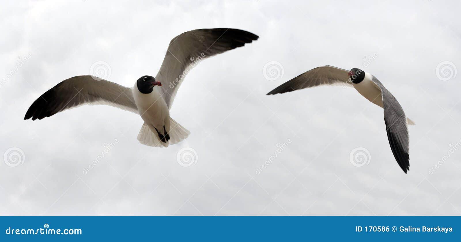 Bird couple