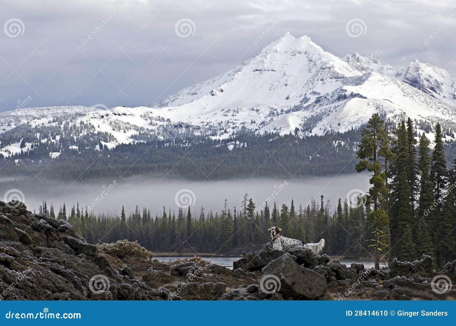 Bird Dog In Mountains