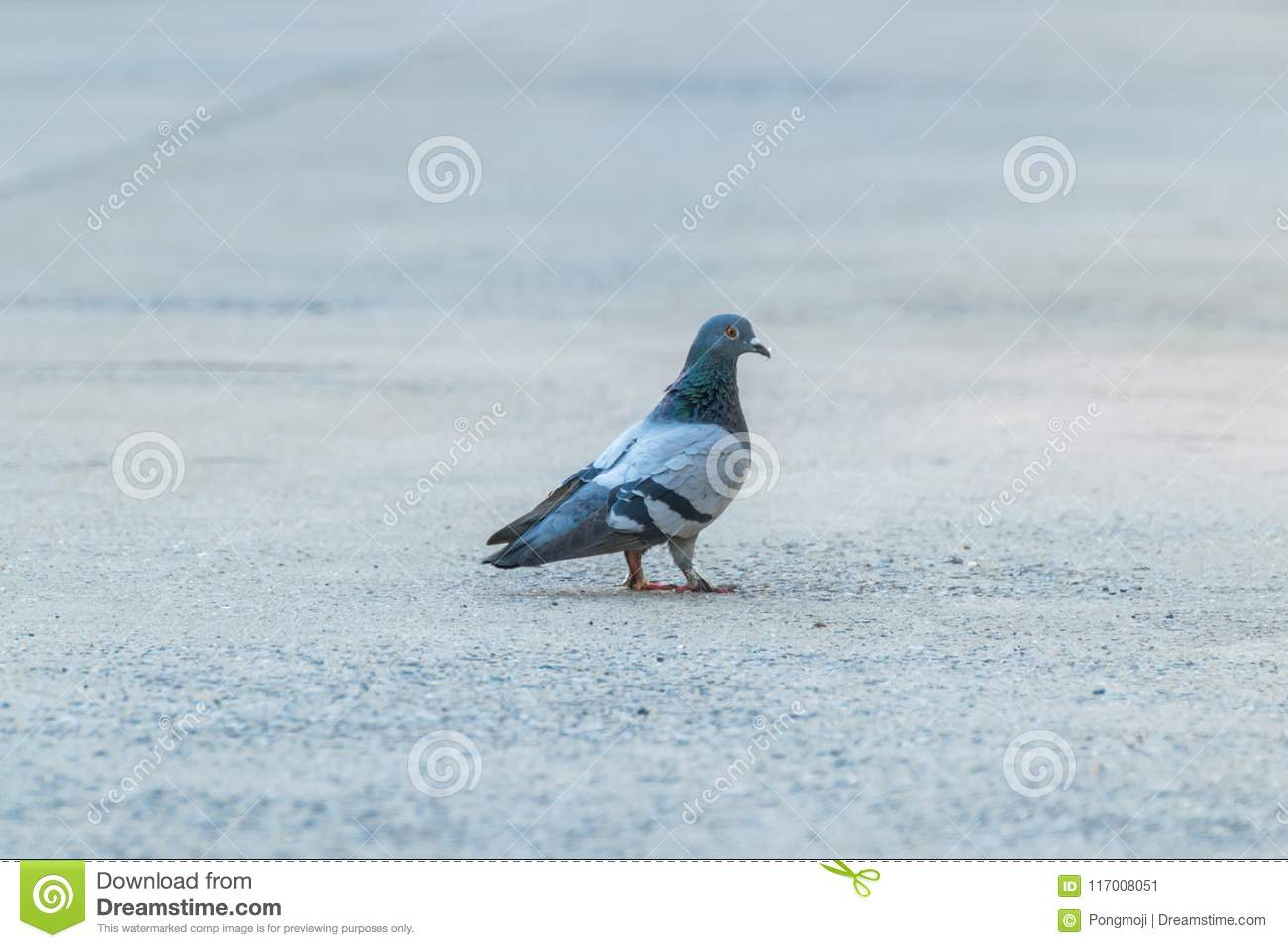 Bird (Dove, Pigeon or Disambiguation) in a city