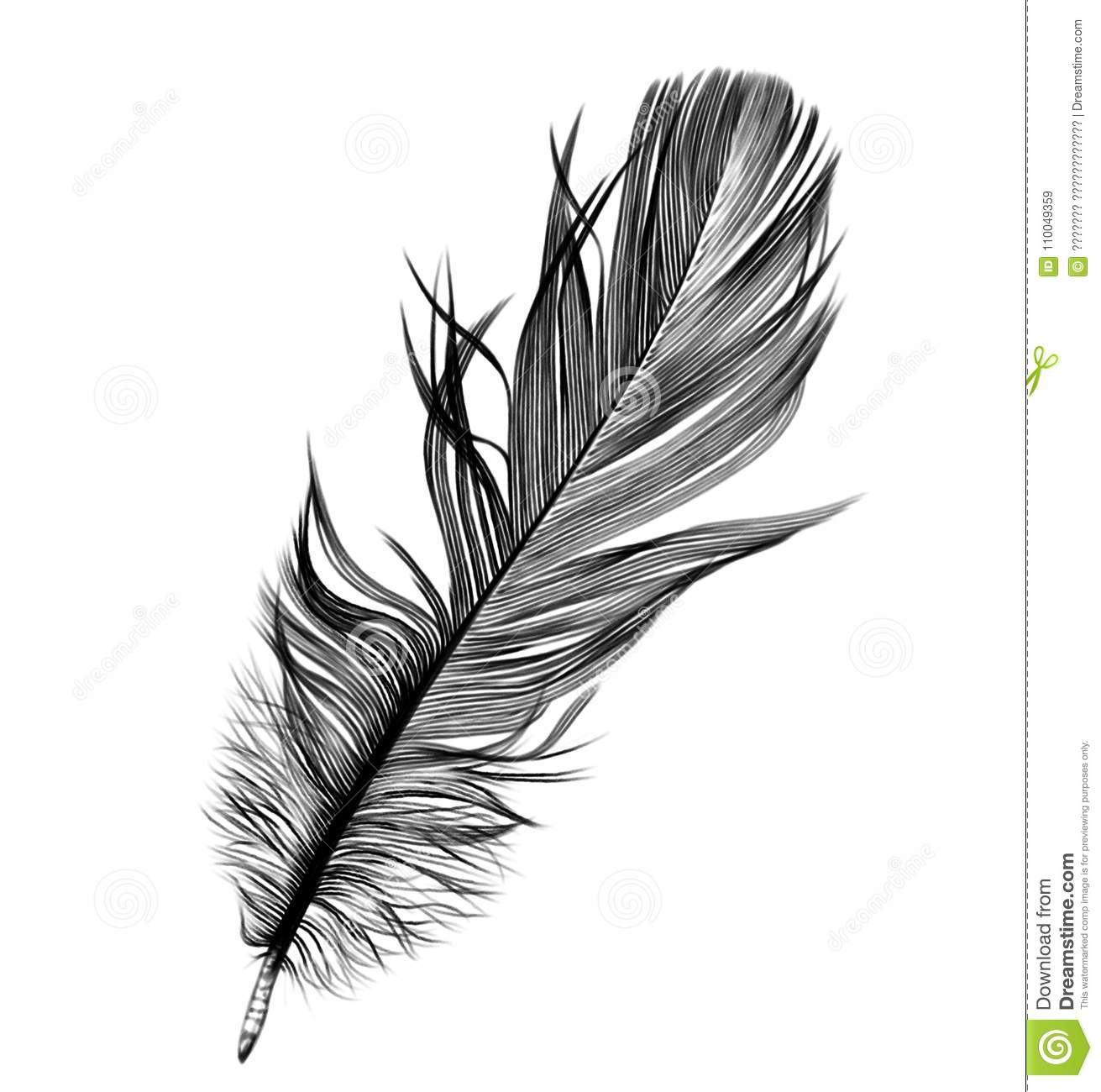 Bird feather quill pencil drawing stock illustration