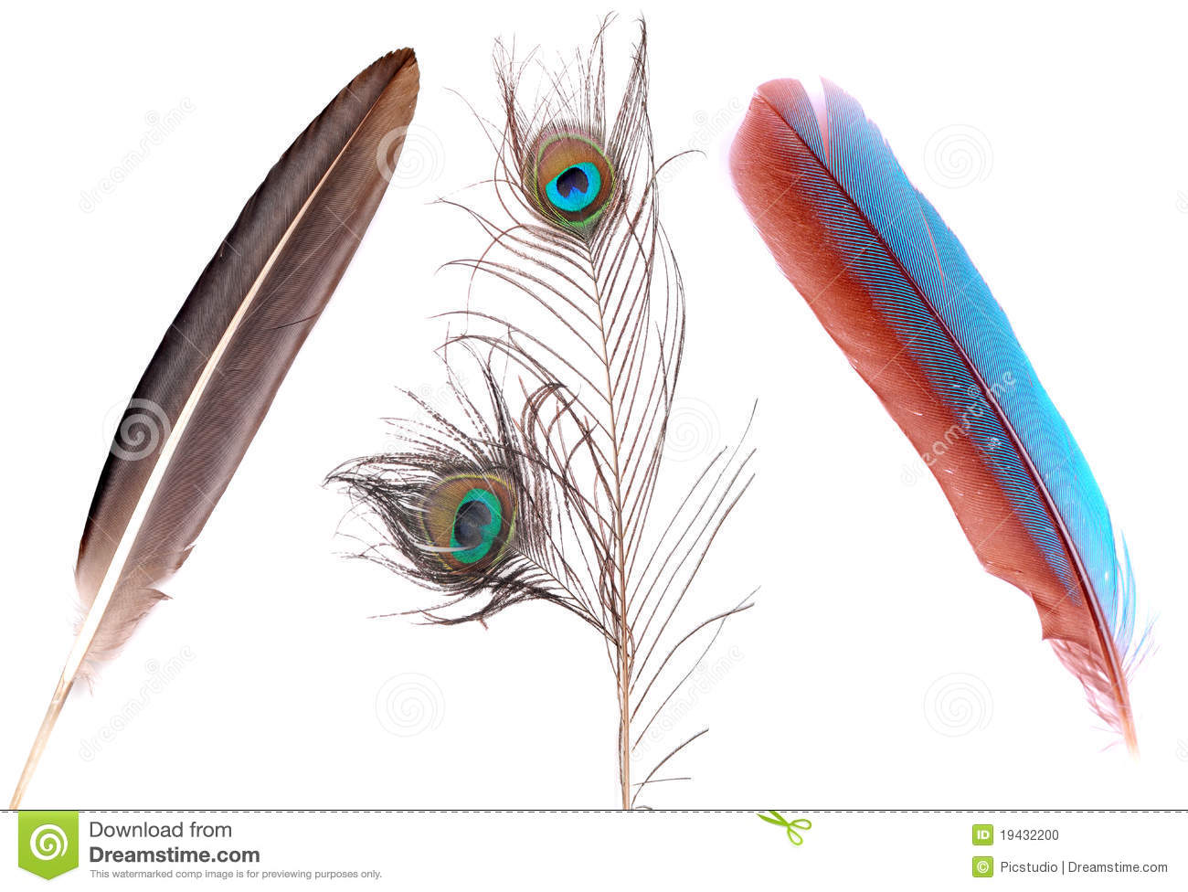 Different bird feathers - photo#6