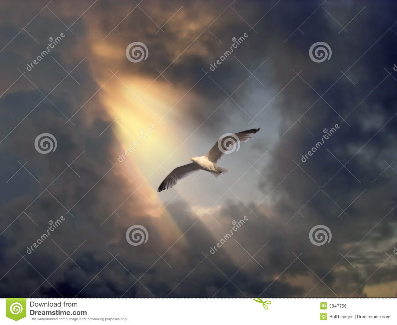 Flying Birds Free Stock Photos Download 3 416 Free Stock: Bird In Flight Stock Photo. Image Of Jesus, Landscape