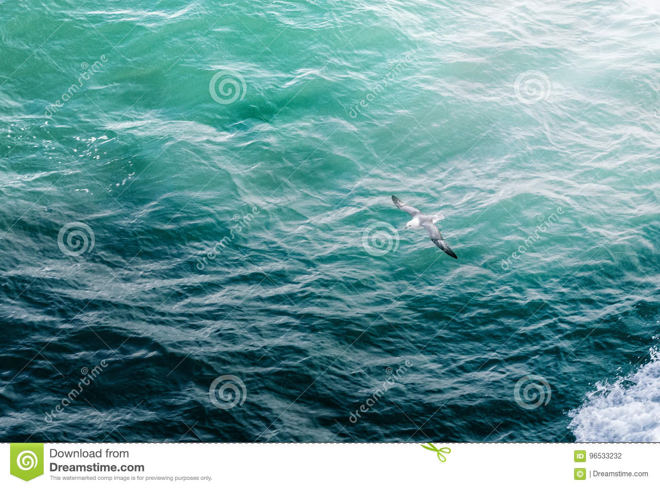 Bird Flying over the sea on Iceland