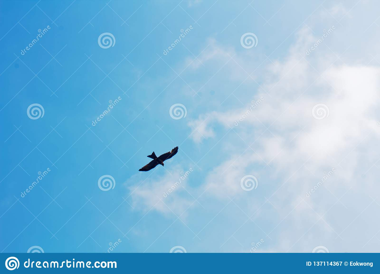 Bird flying, soaring in the sky, nice weather