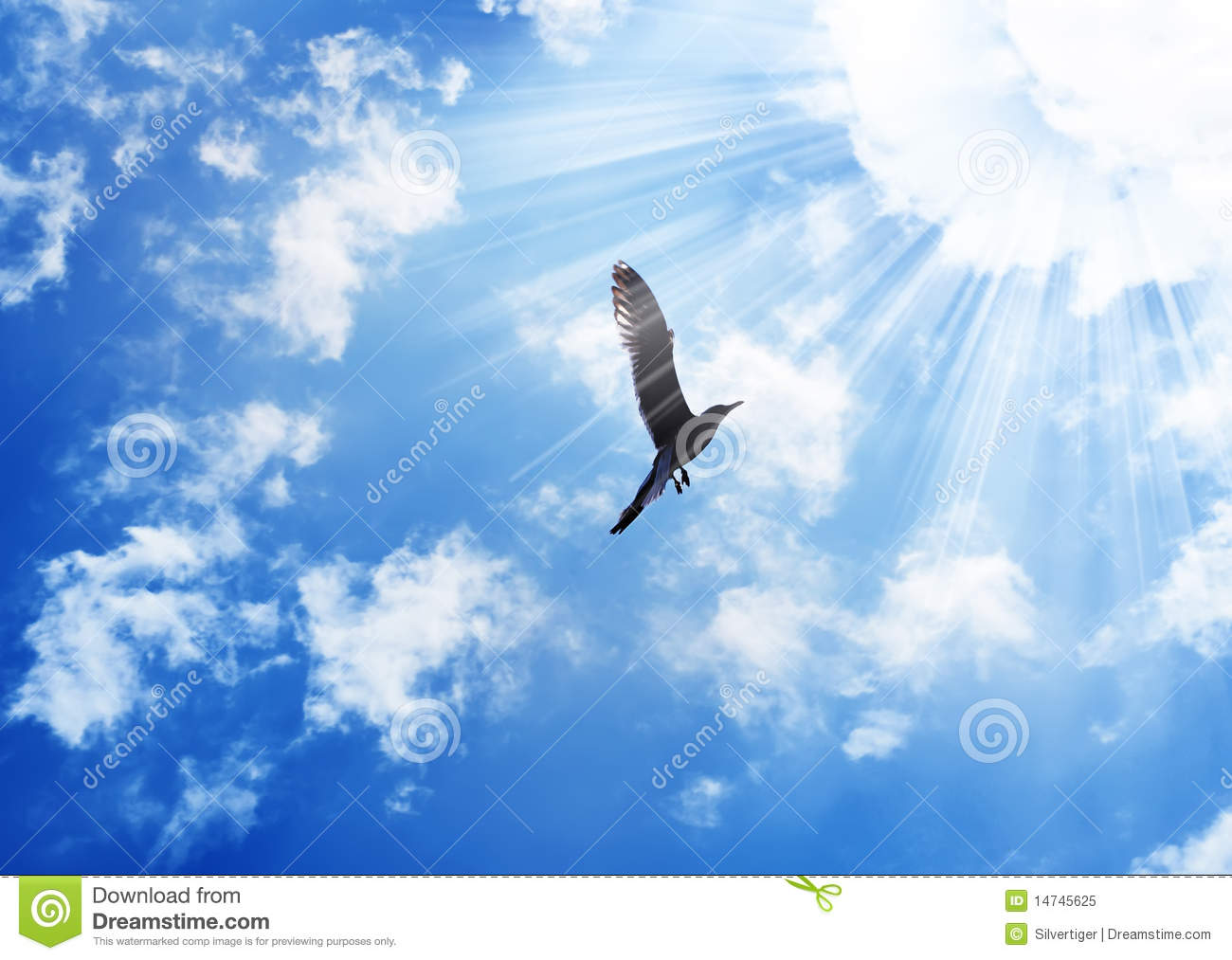 Bird flying to the sun
