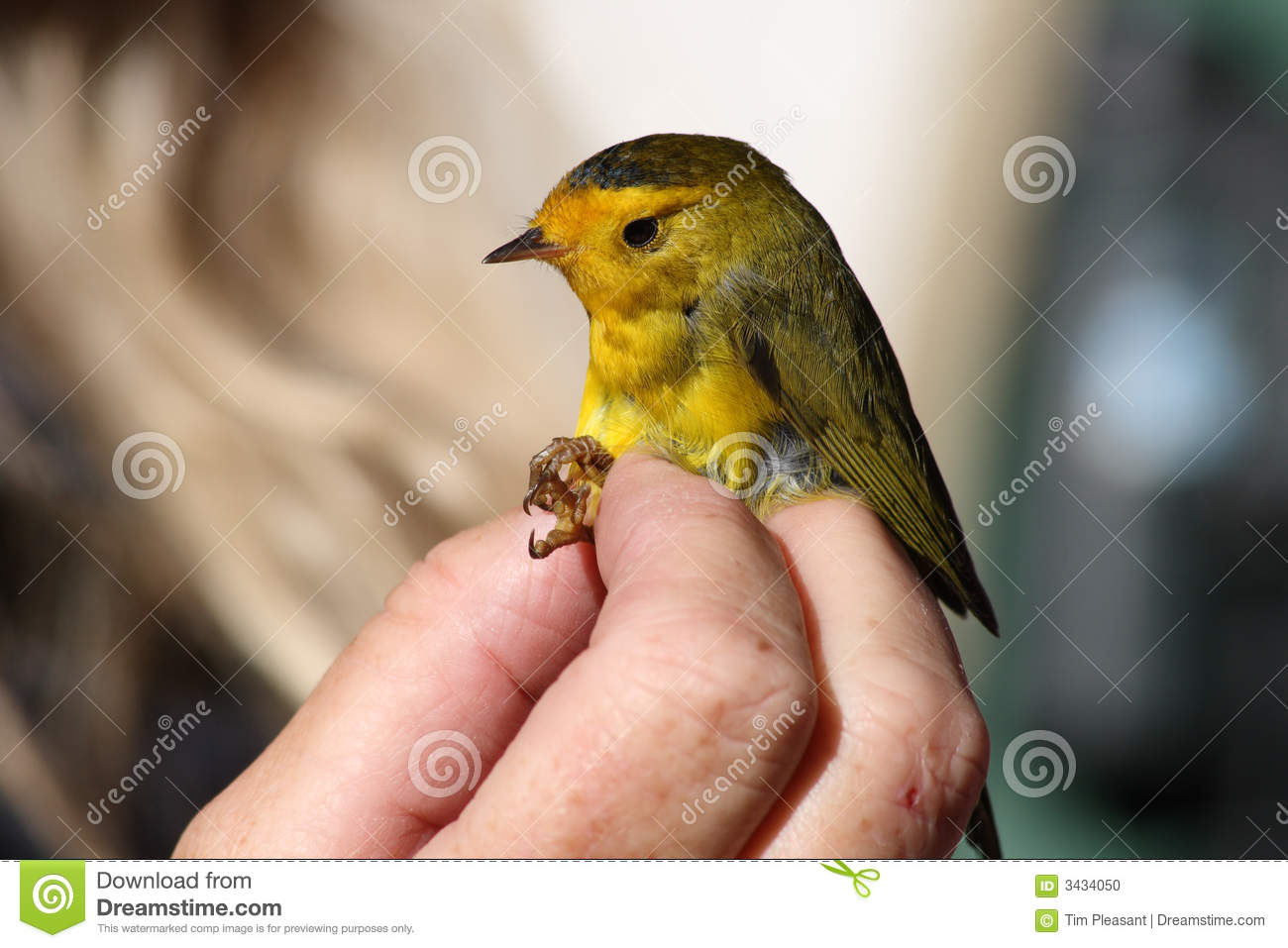 bird in hand single bbw women Get information, directions, products, services, phone numbers, and reviews on ruthie's tee company in bird in hand, pa discover more women's clothing stores companies in bird in hand on mantacom.
