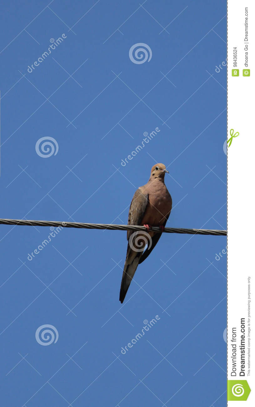 Bird stock photo. Image of wires, hanging, blue, skies - 98436524