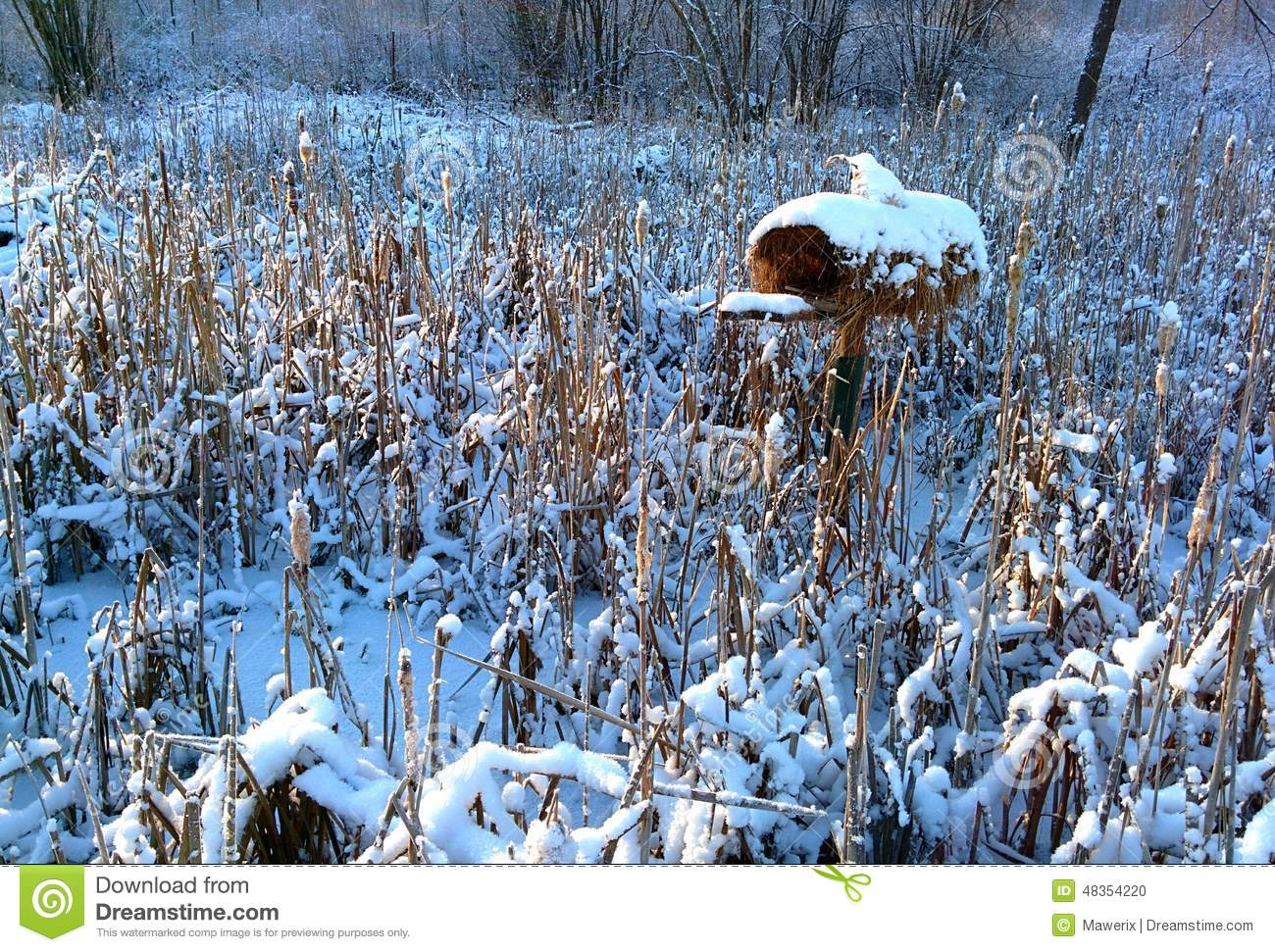 Bird house stock photo image 48354220 for Winter duck house