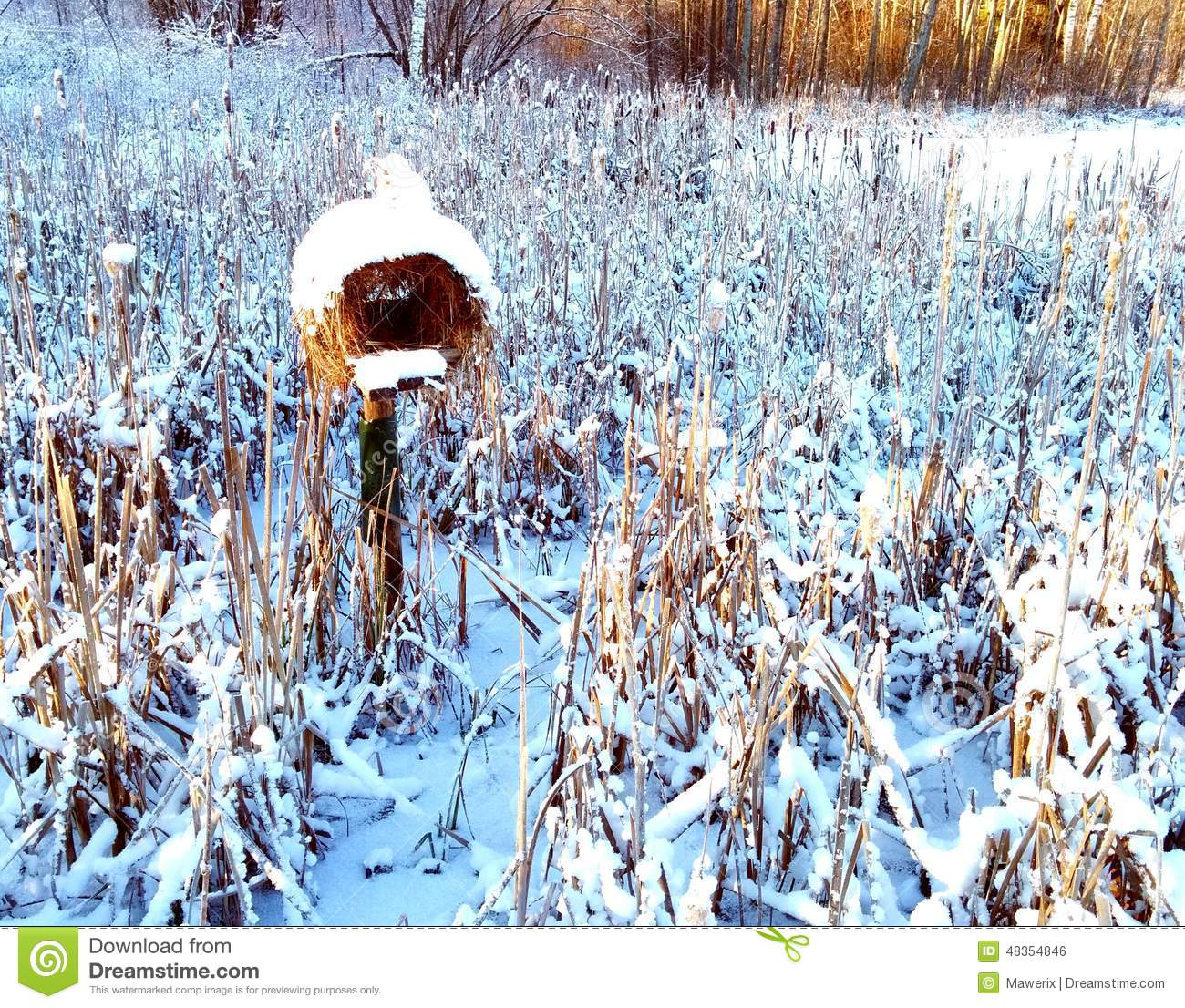 Bird house stock photo image 48354846 for Winter duck house