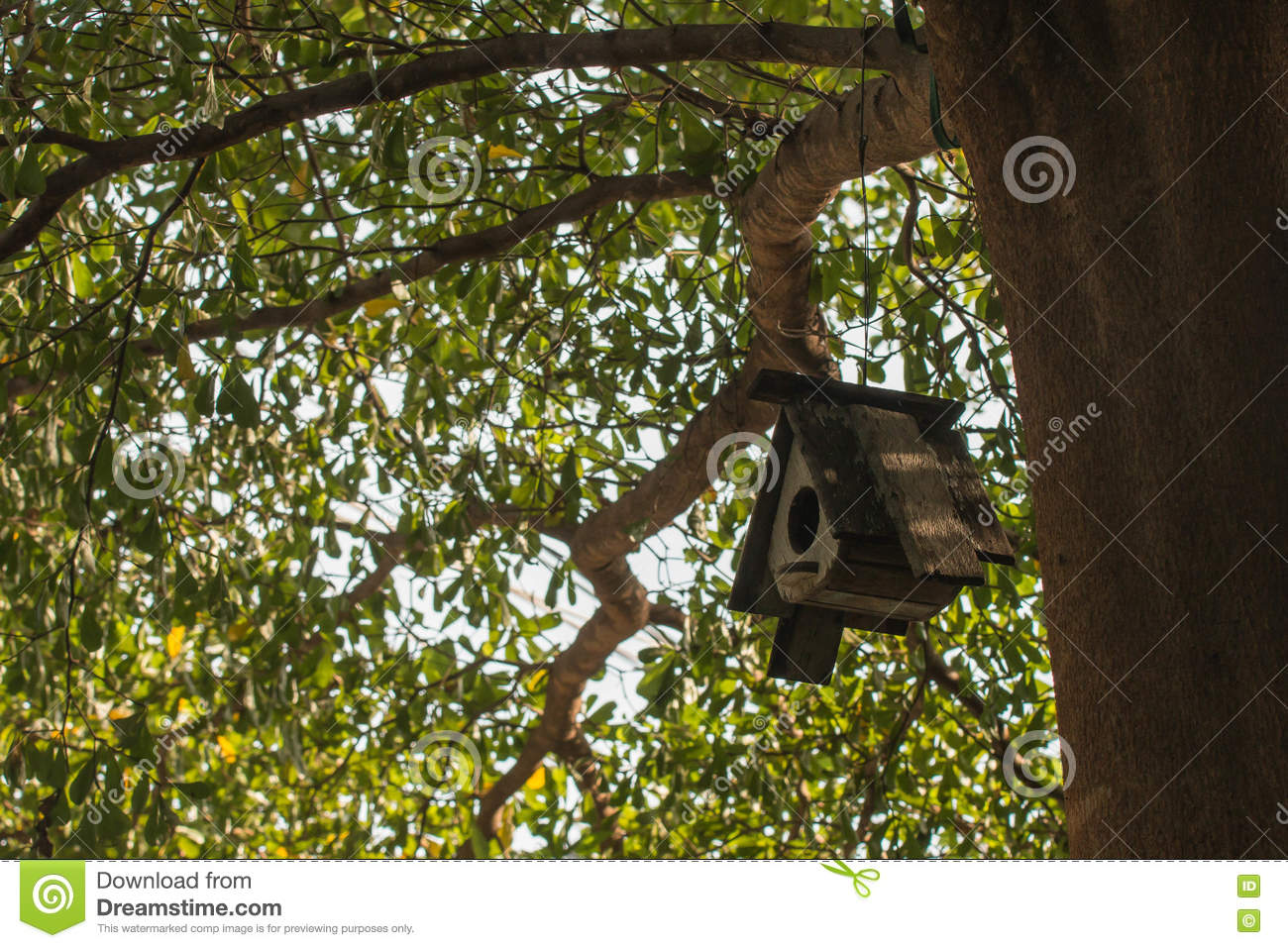 Hanging Tree House Bird House Hanging From The Tree With The Entrance Hole In The