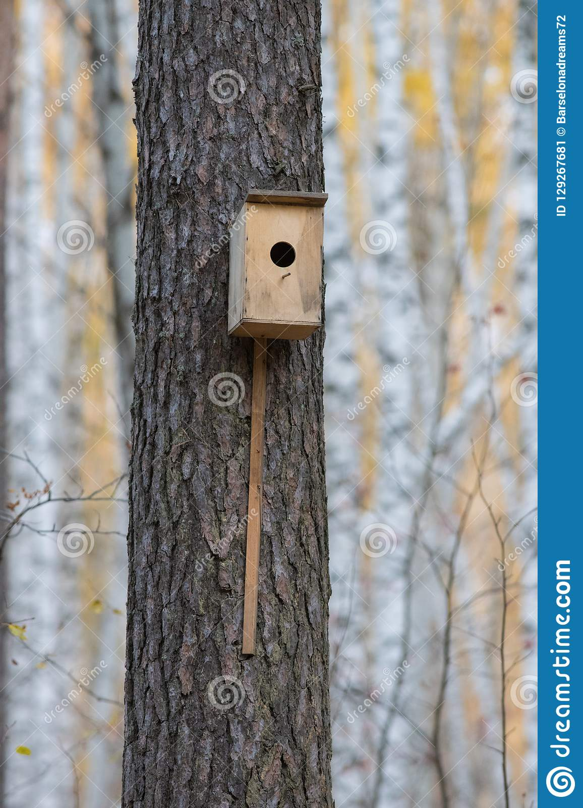 Bird house hanging from the tree with the entrance hole in the shape of a circle in autumn forest