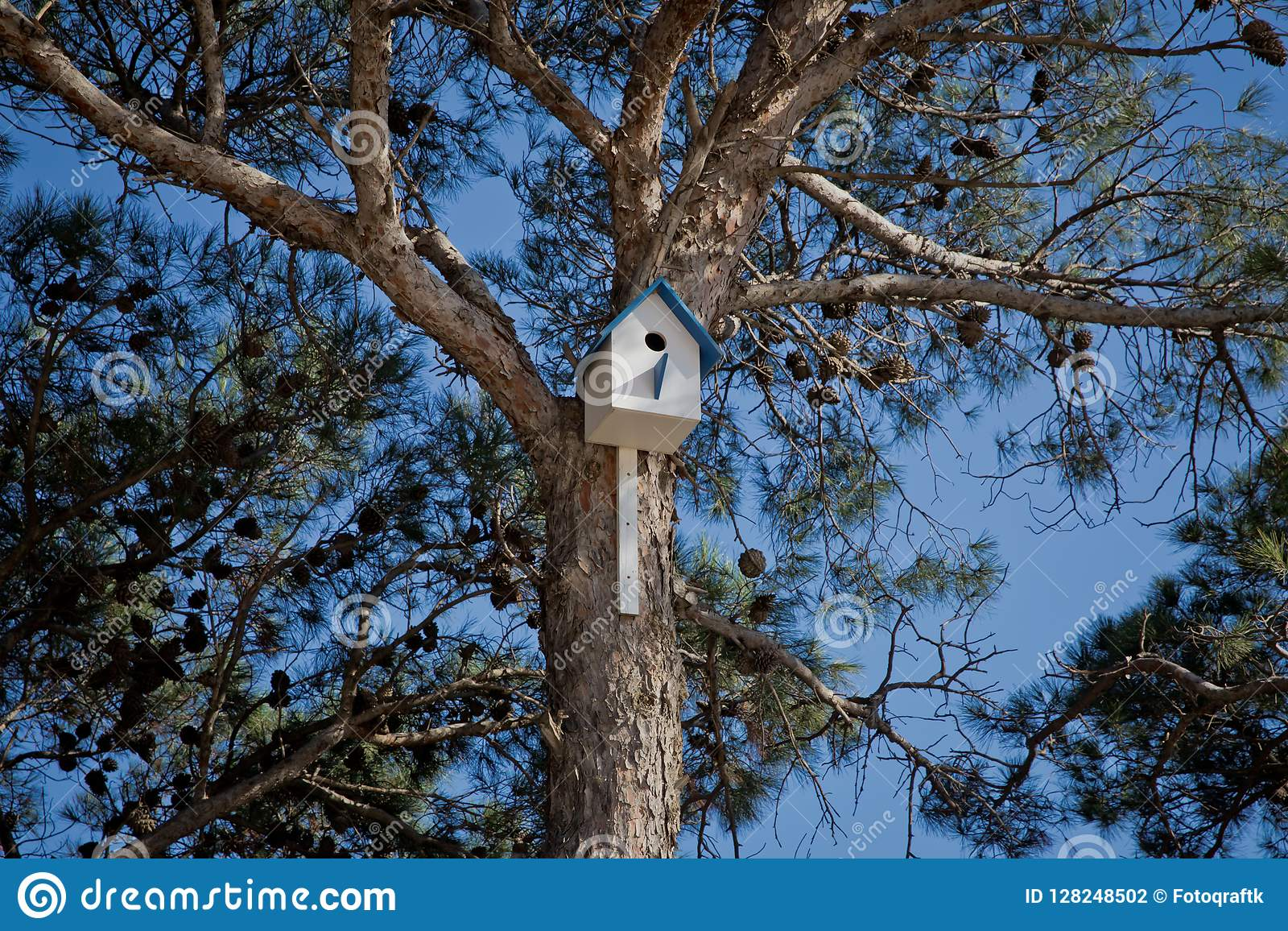 Bird house hanging from the tree with the entrance hole in the shape of a circle. Azerbaijan Baku .Sky birdhouse on a tree in a gr