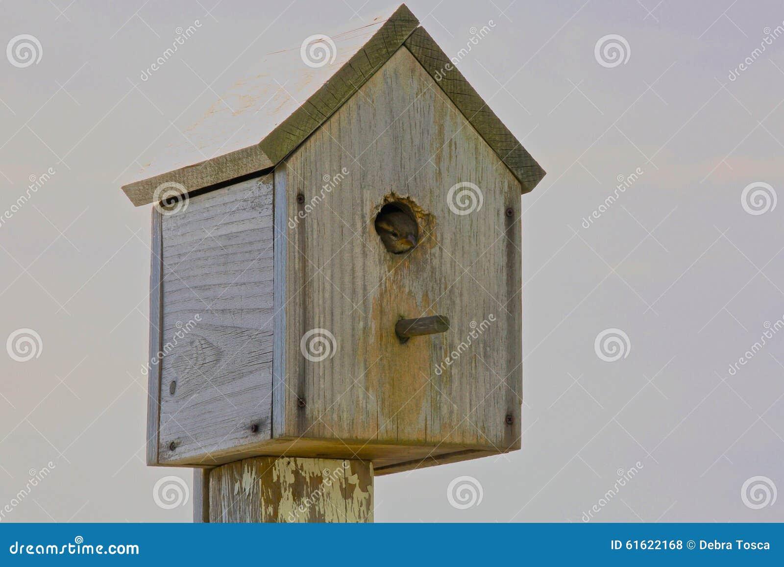 Bird House Stock Photo Image Of Birdhouse Wood Finch