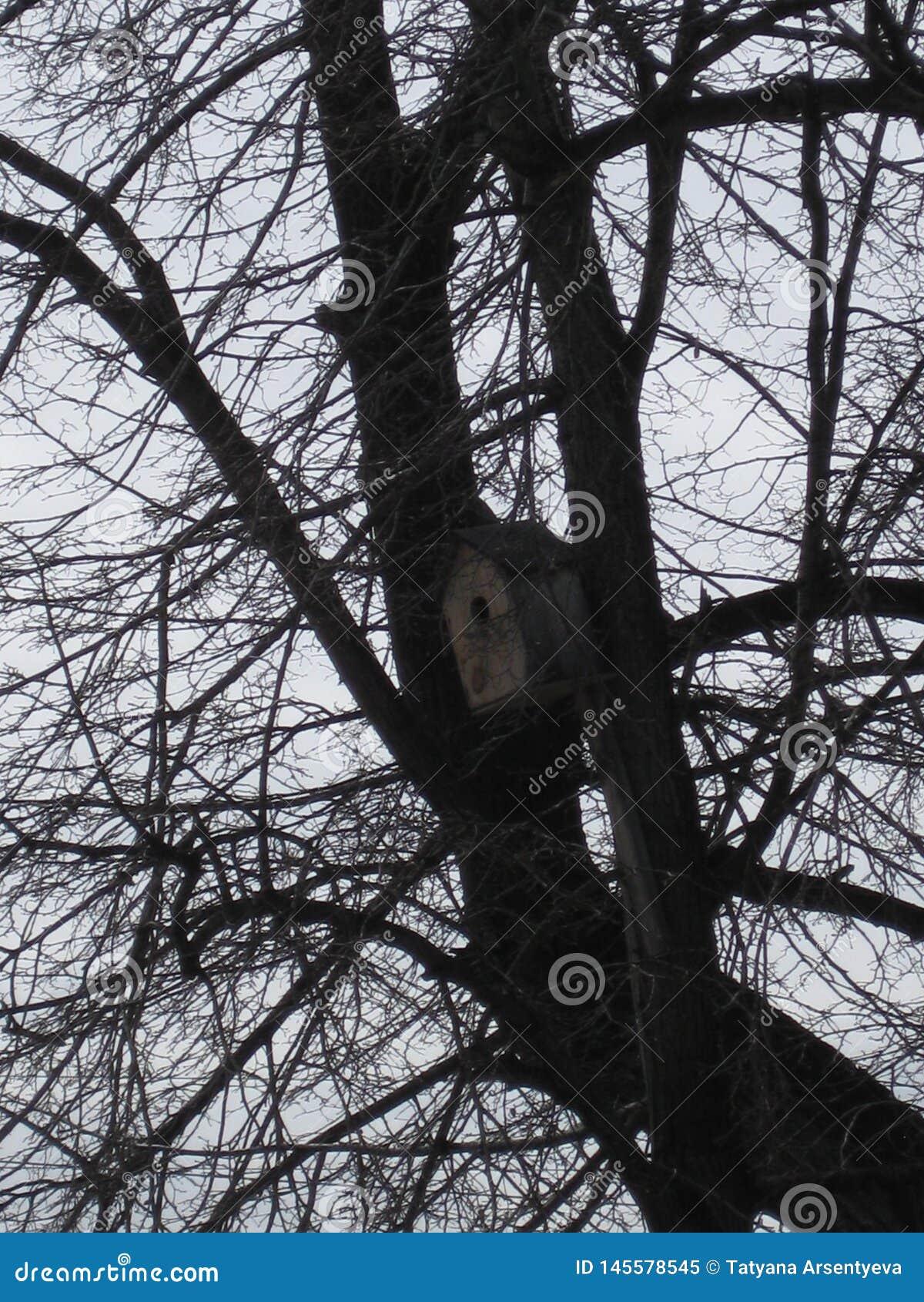Bird house in the tree