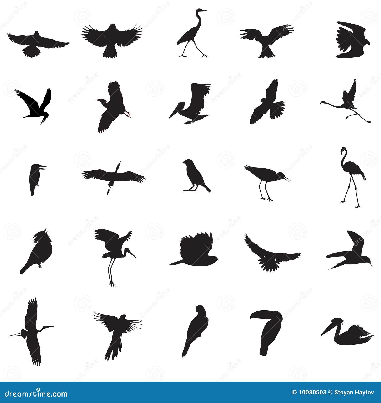 Bird Illustrations Stock Photos Image 10080503