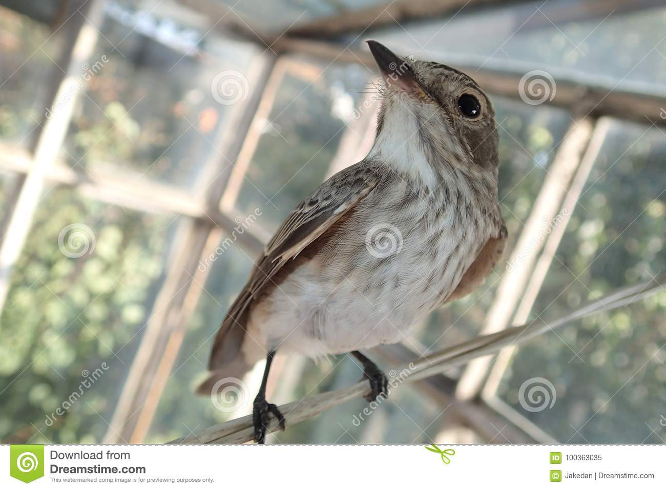 Bird on a laundry wire stock image  Image of wings, bird