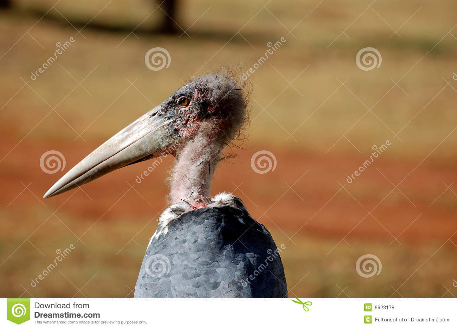 bird with long beak or bill stock photo 6923178 megapixl