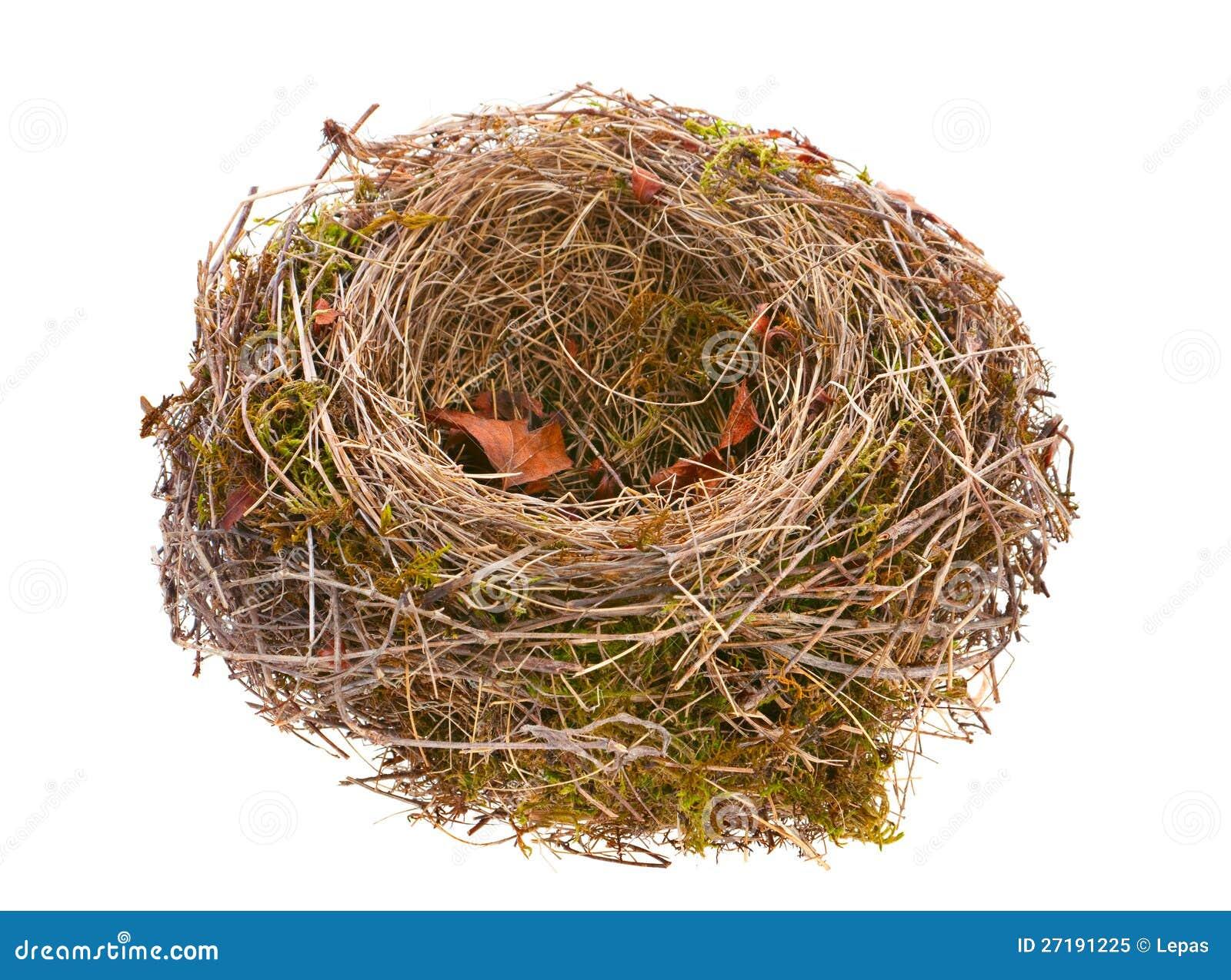 гнездо картинка графическая
