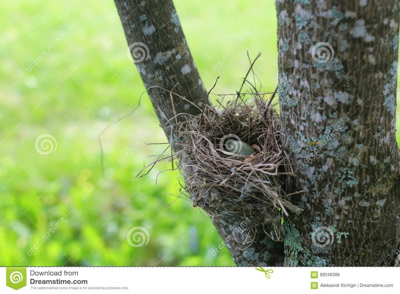 Bird nest in nature stock photo  Image of branch, brood