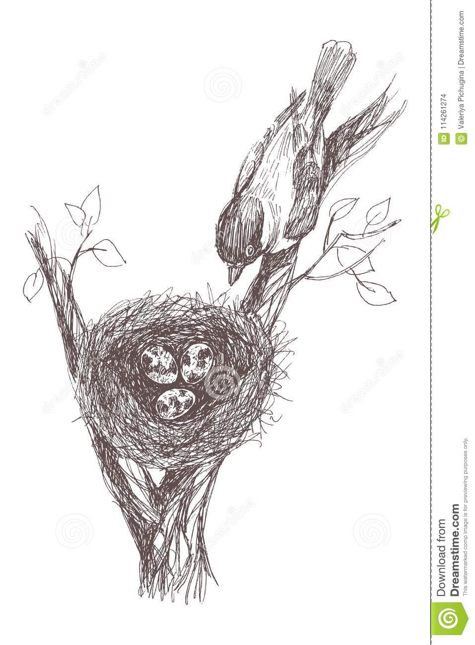 Robin nest eggs and feathers hand drawn in illustrator with charcoal brushes to create an effect of pencil drawing