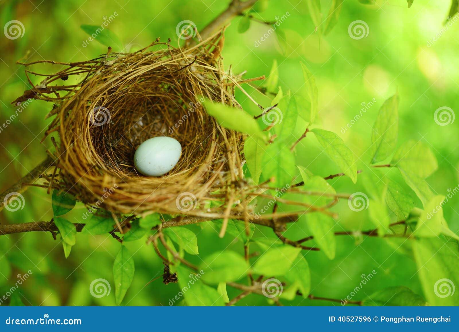 Bird nest on tree