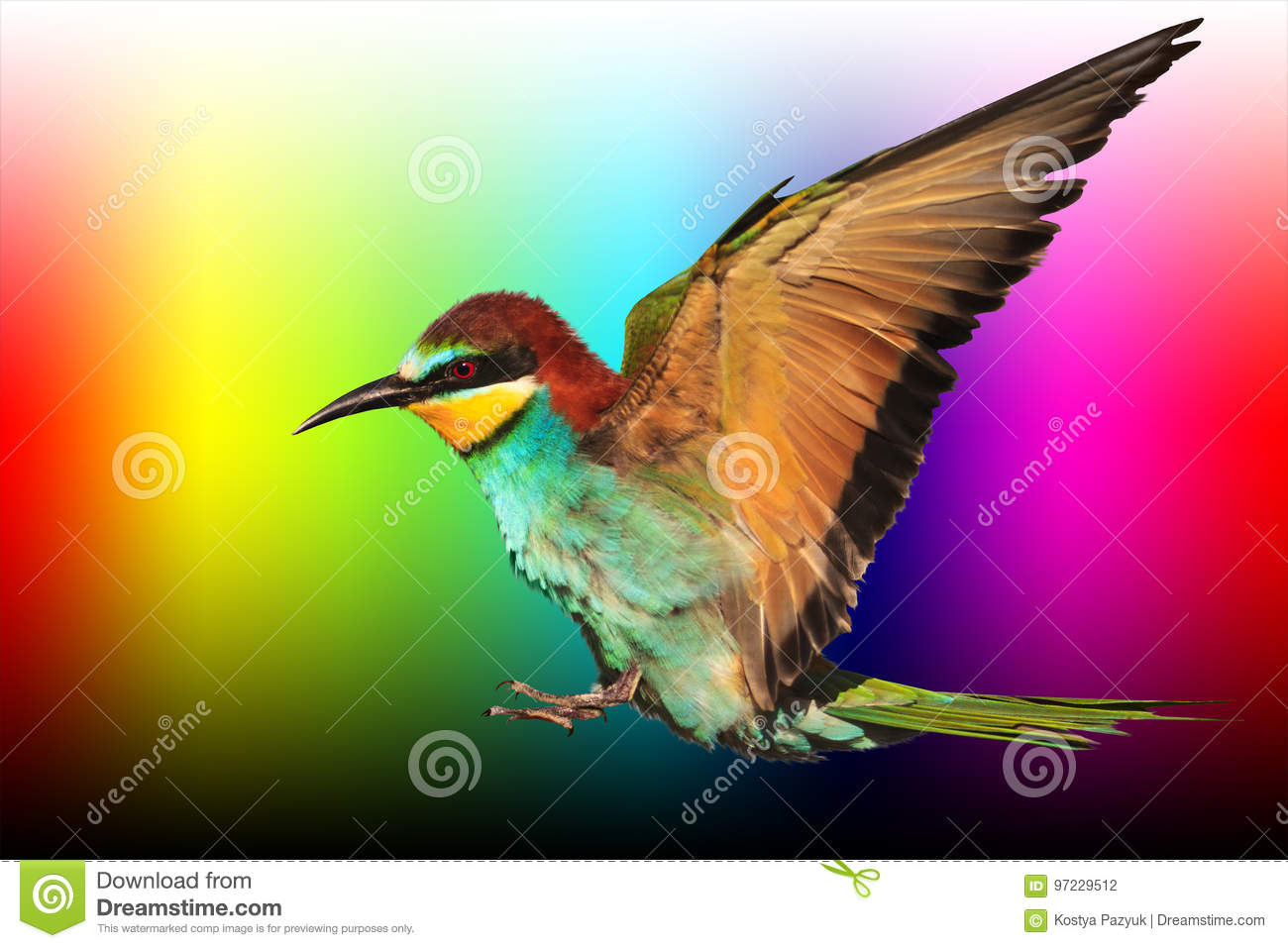 Bird of paradise in flight is on a palette of colors stock photo royalty free stock photo biocorpaavc Images