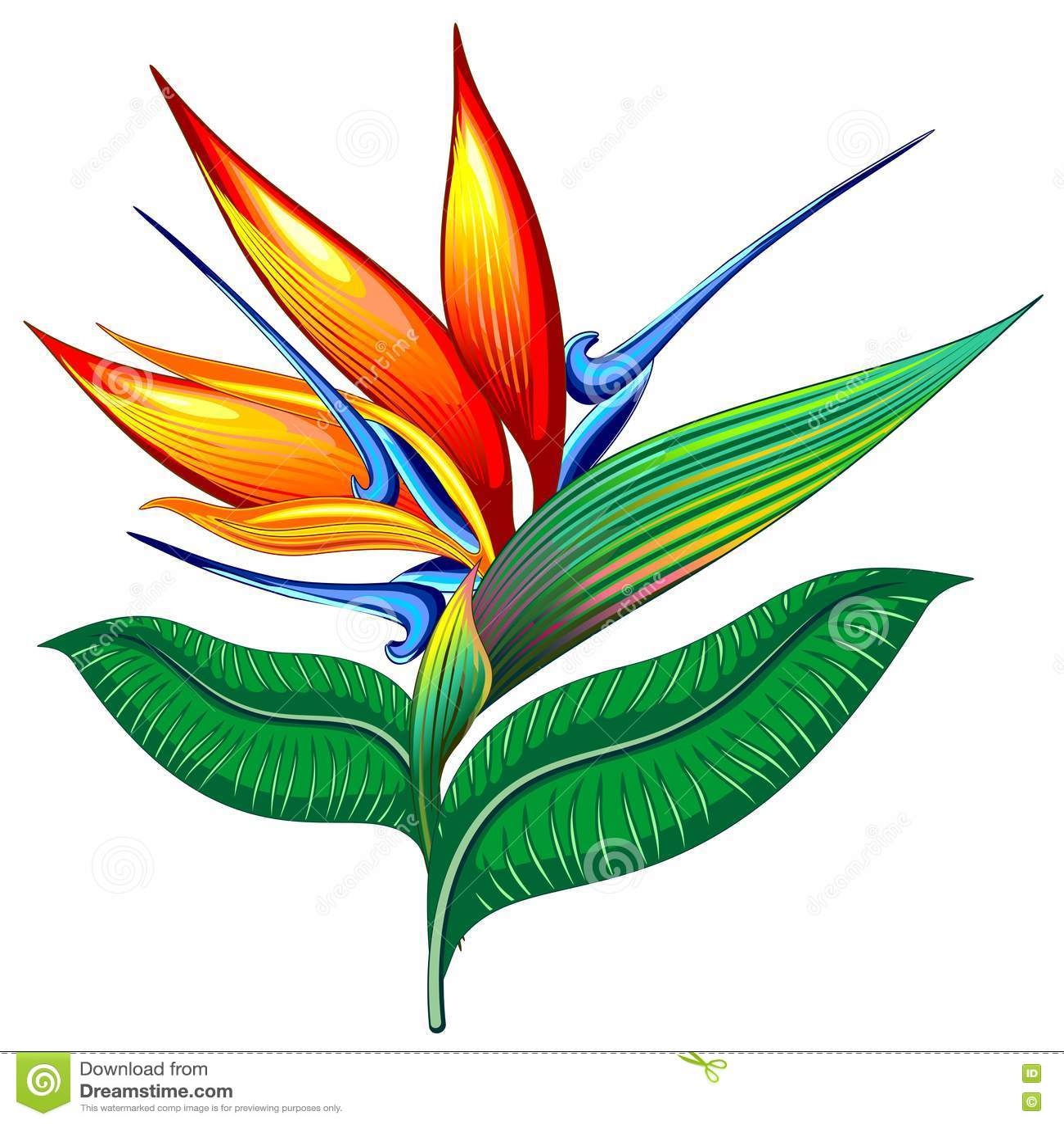 Bird of Paradise Flower, Exotic Botanical Vector illustration, Strelizia