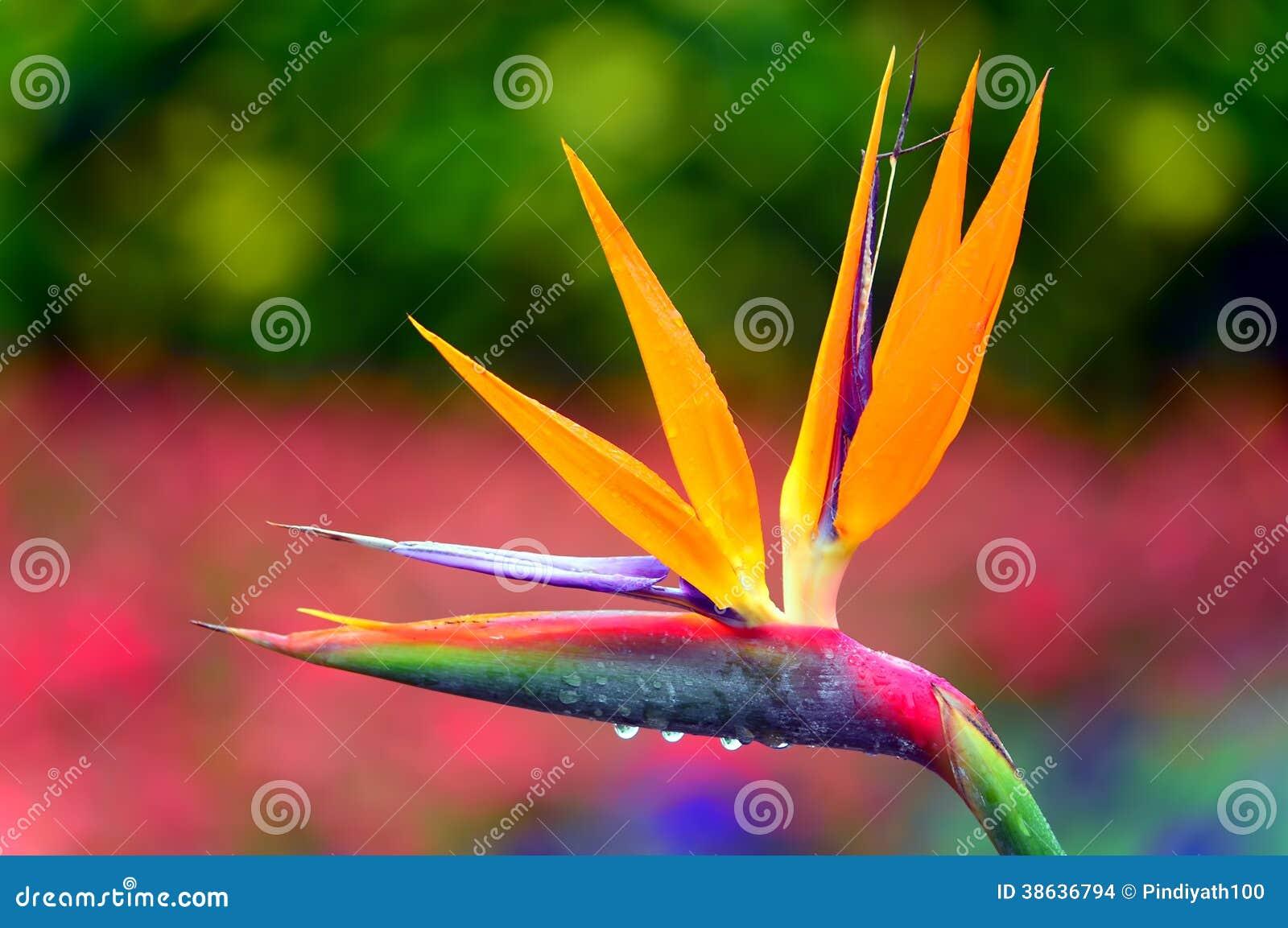 Bird Stock Photos - Royalty Free Pictures