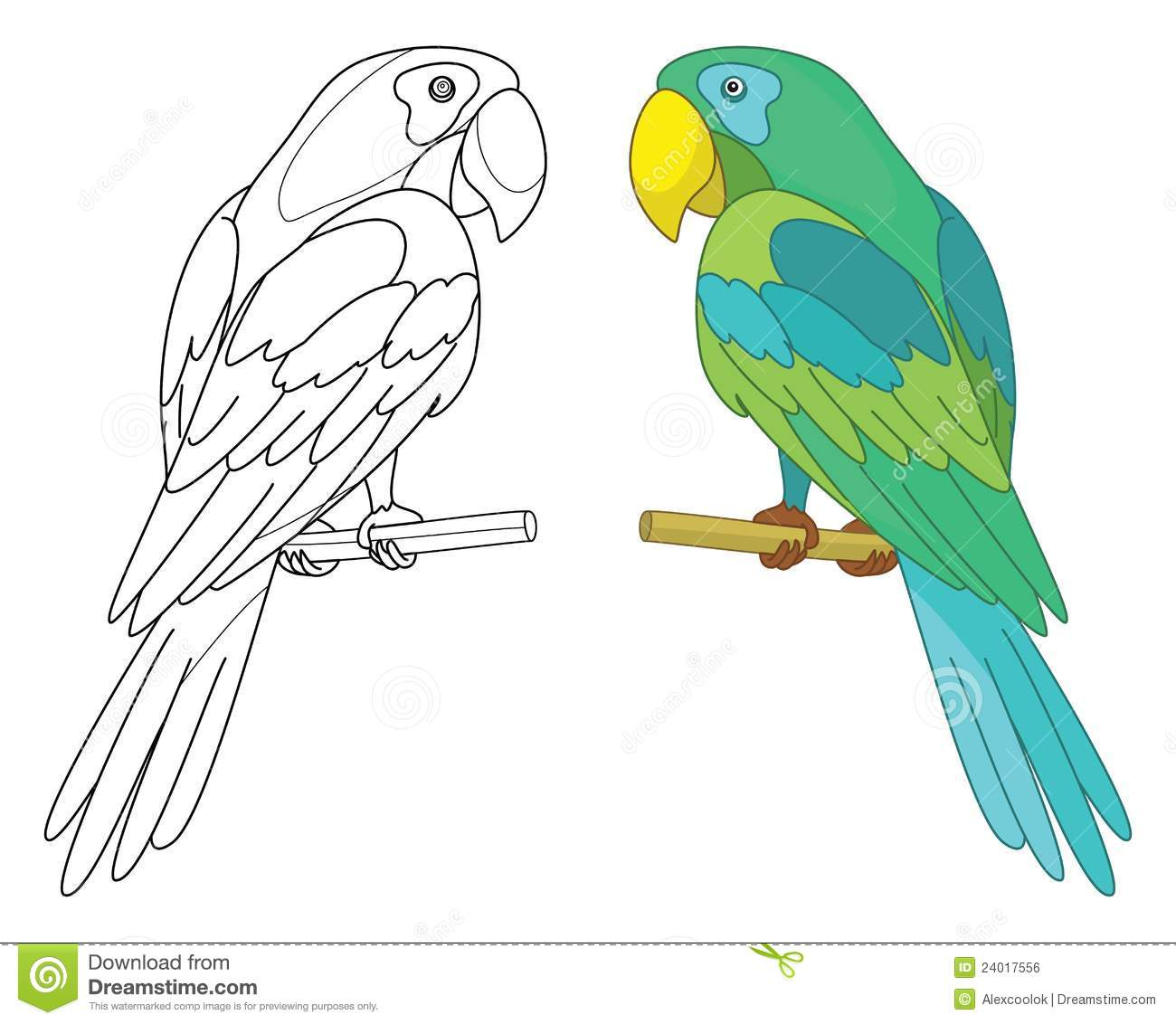 Bird Parrot On A Perch Royalty Free Stock Image Image
