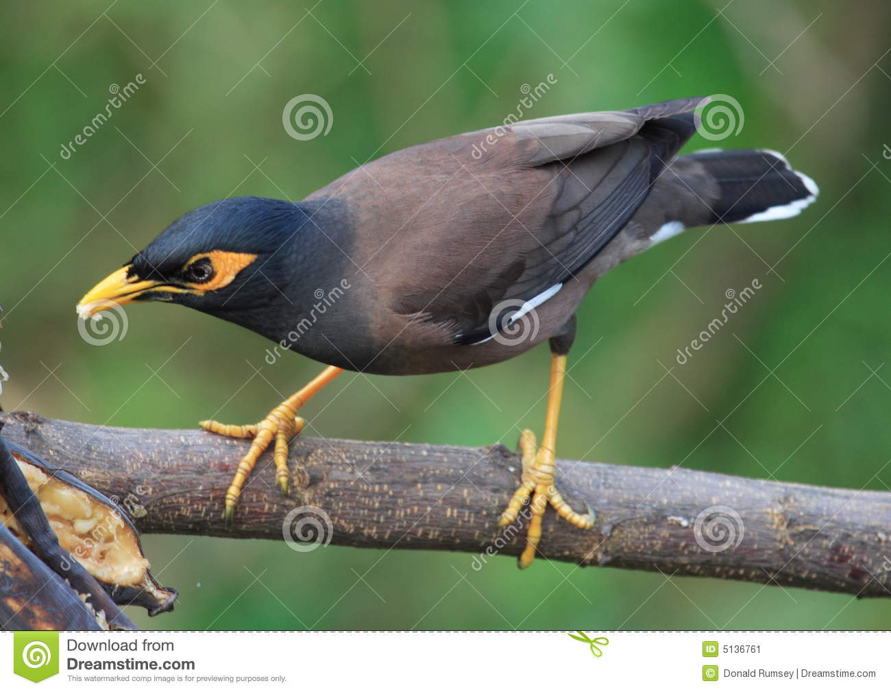 Bird Perched On Tree Branch. 30.36 Jpg Stock Image - Image ...