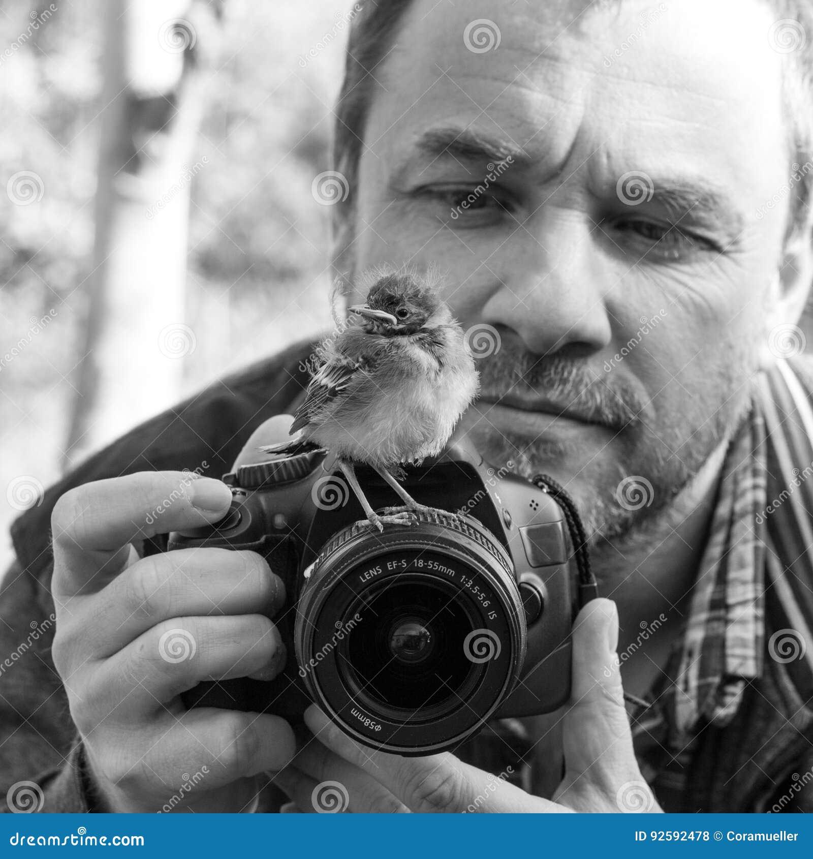 Download Bird and photographer stock photo. Image of cute, bird - 92592478
