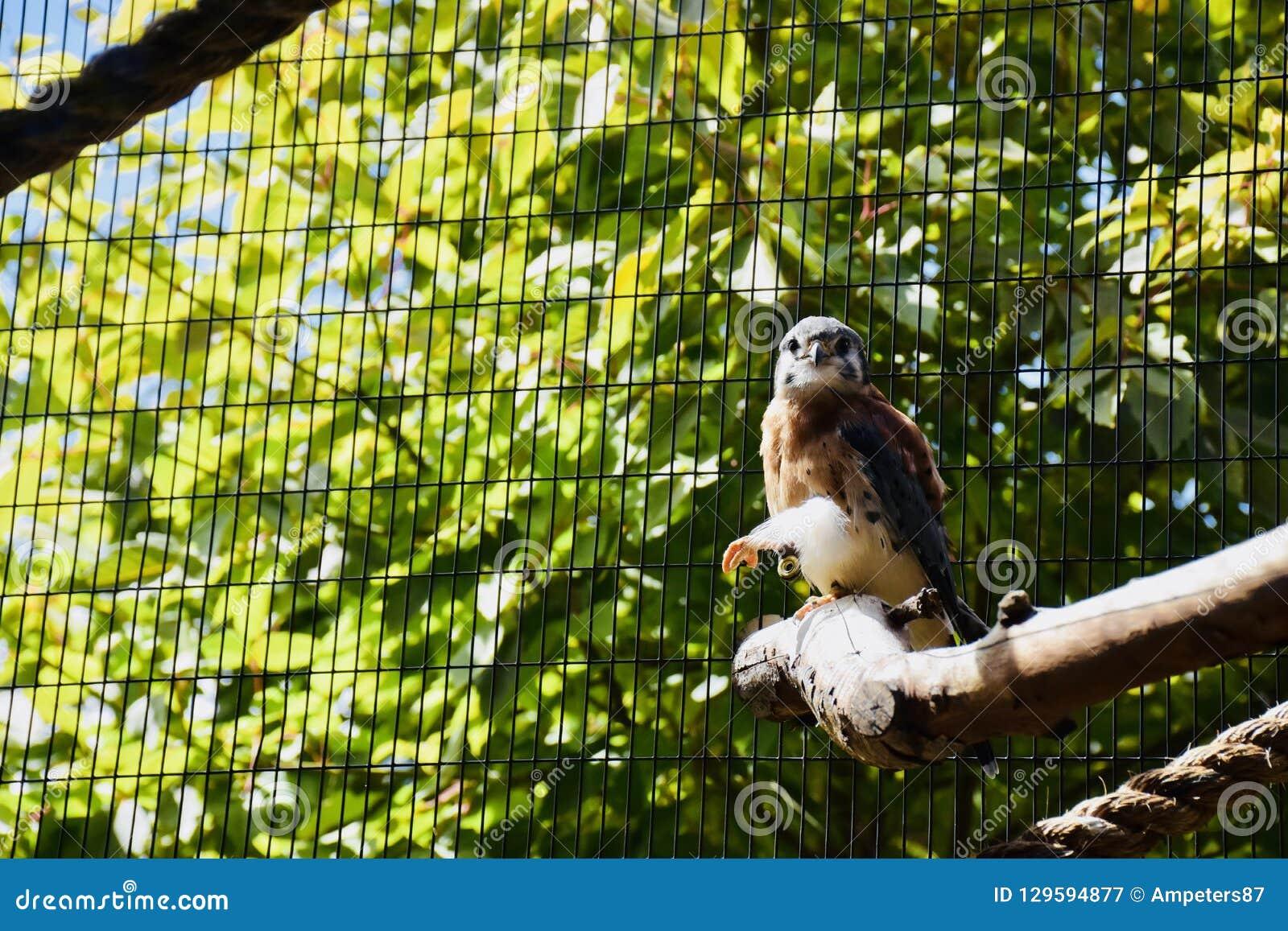 Bird of prey at Cheyenne Mountain Zoo