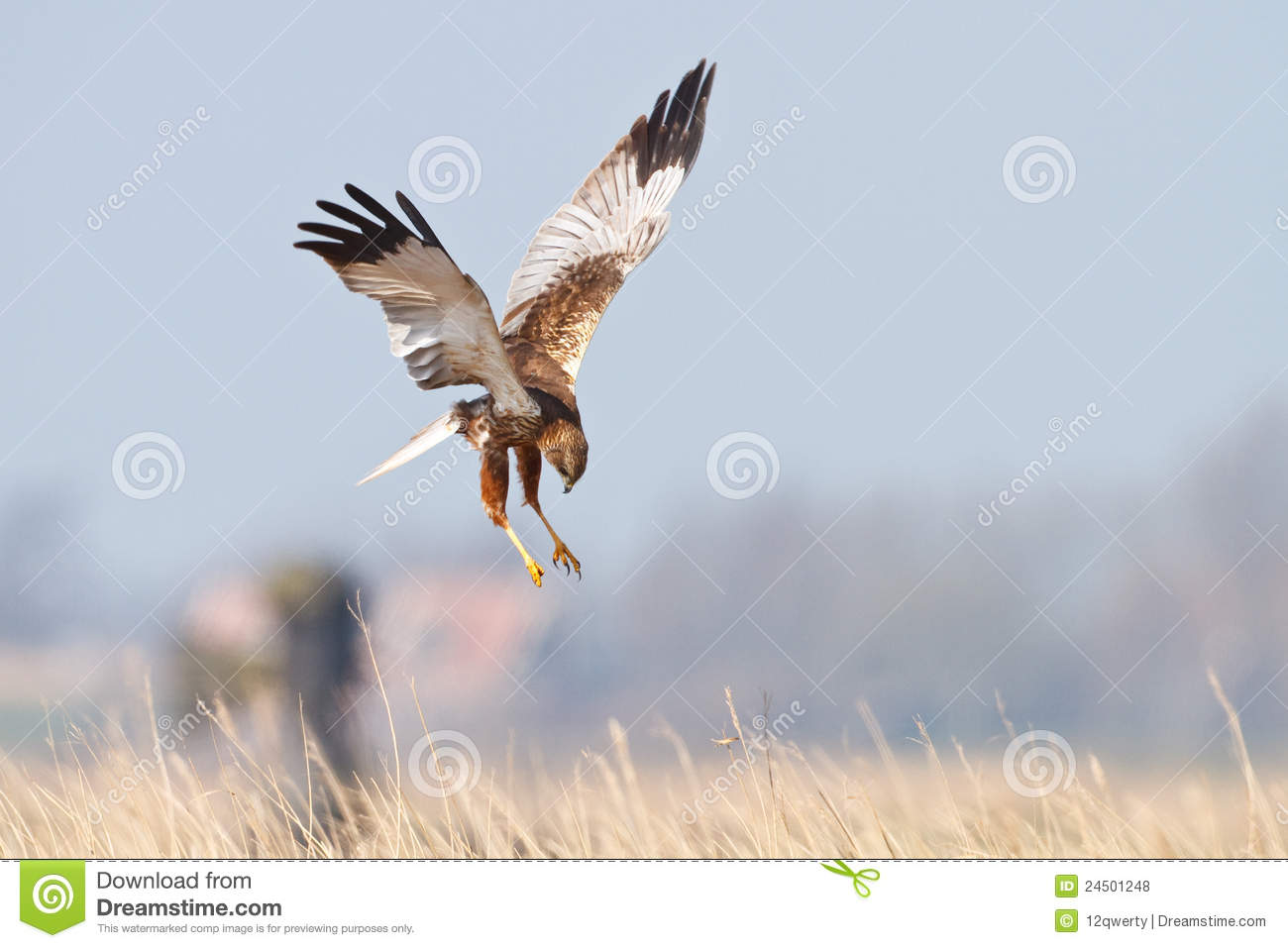 Flying Birds Free Stock Photos Download 3 416 Free Stock: Bird Of Prey In Flight Stock Photo. Image Of Raptor