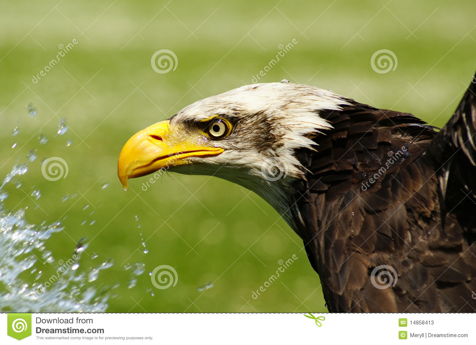 Bird of prey, refreshment