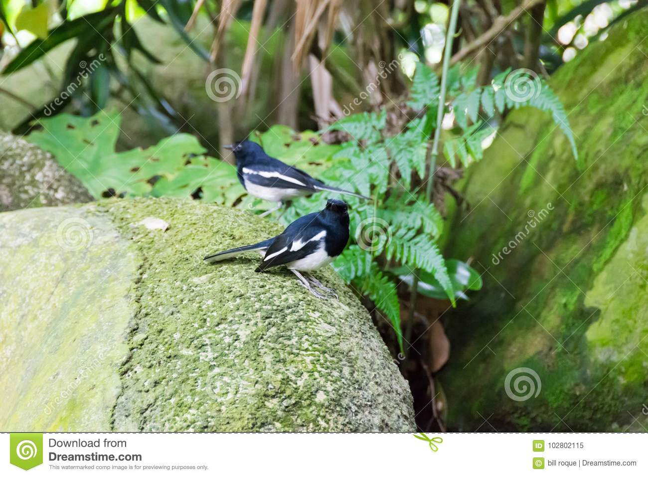 A Bird Resting In Isolation On A Rock Stock Image