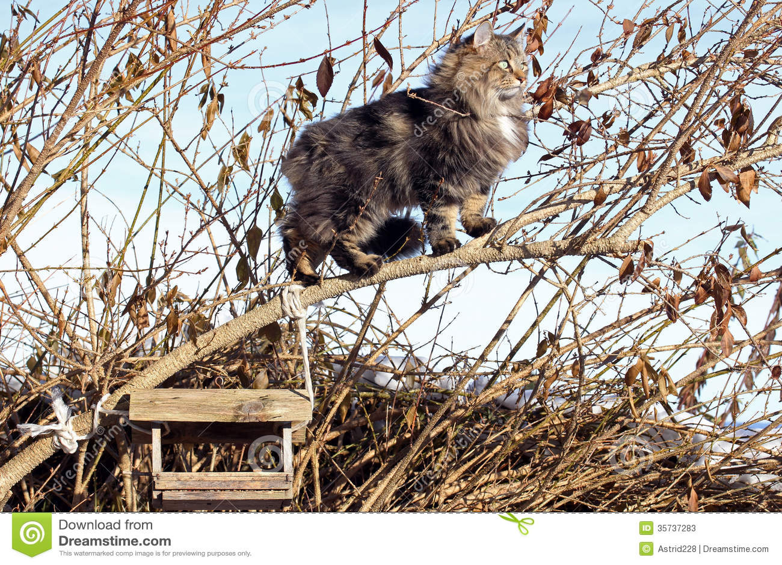 Bird's hunt in the tre...