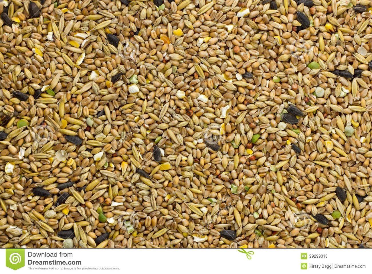 bird seed feed fill frame stock photo image of variety 29299018