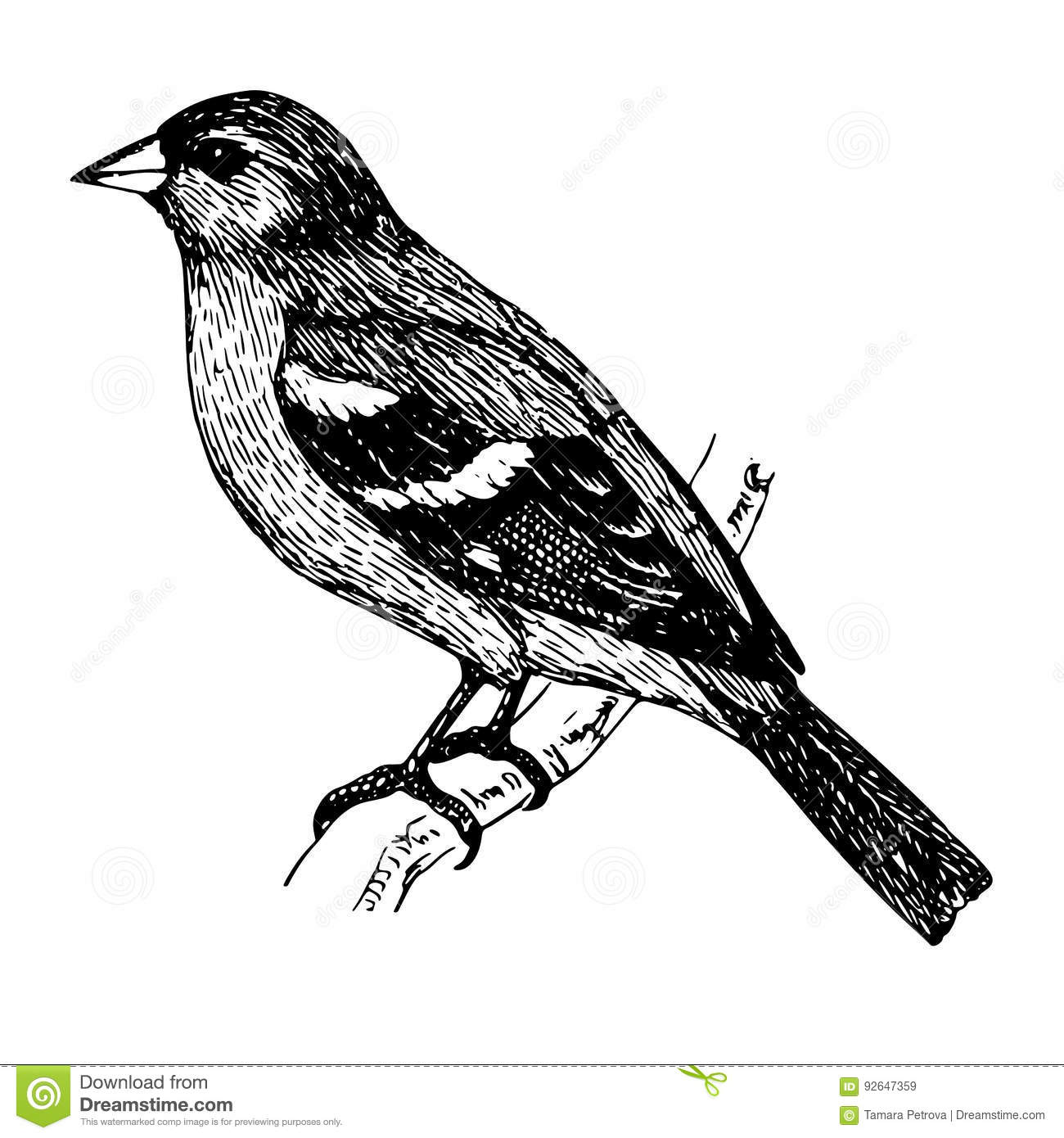 A Bird Sitting On A Branch Sketch Tattoo Stock Illustration Illustration Of Science Beak 92647359