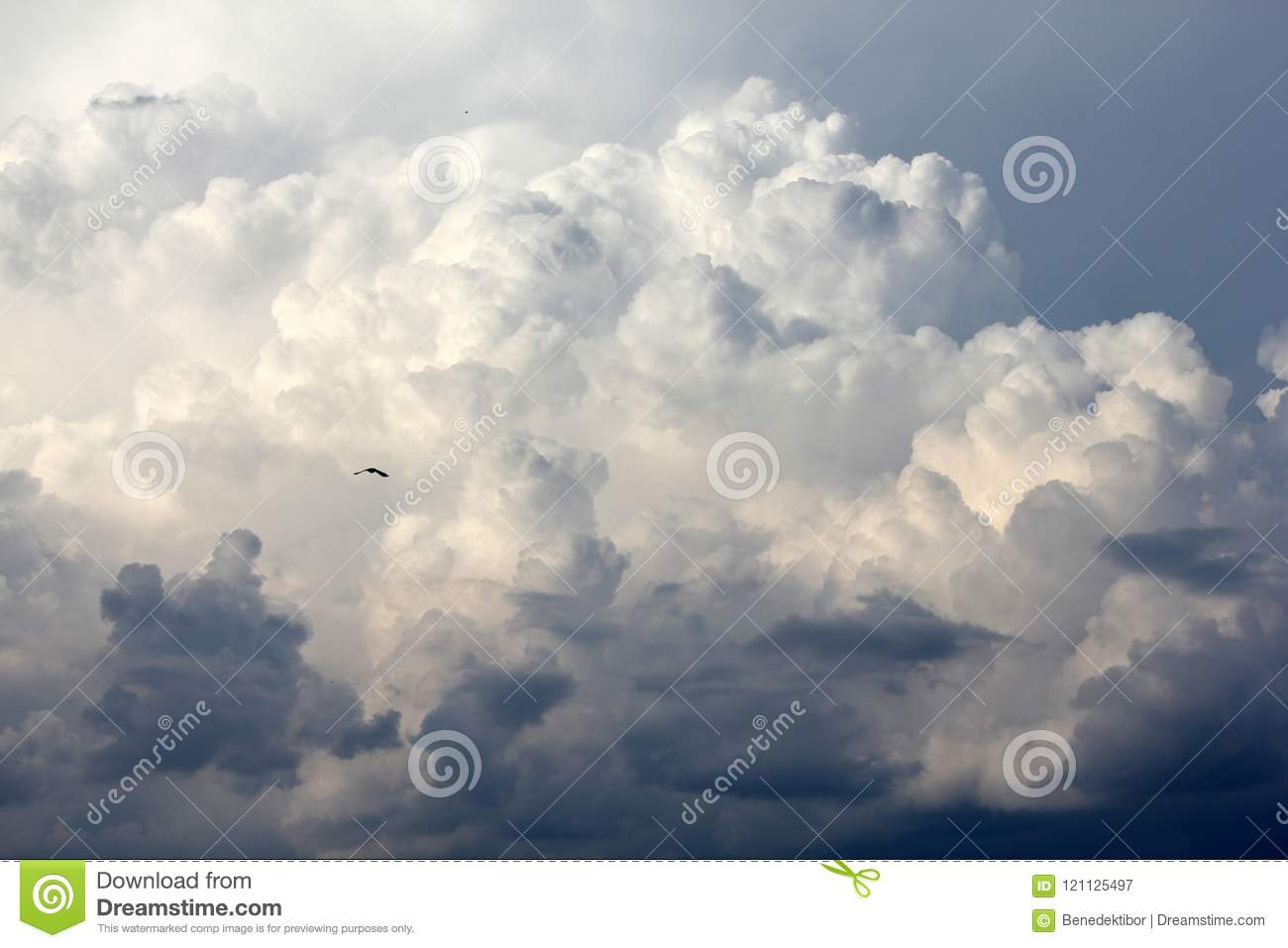 Bird soaring among clouds