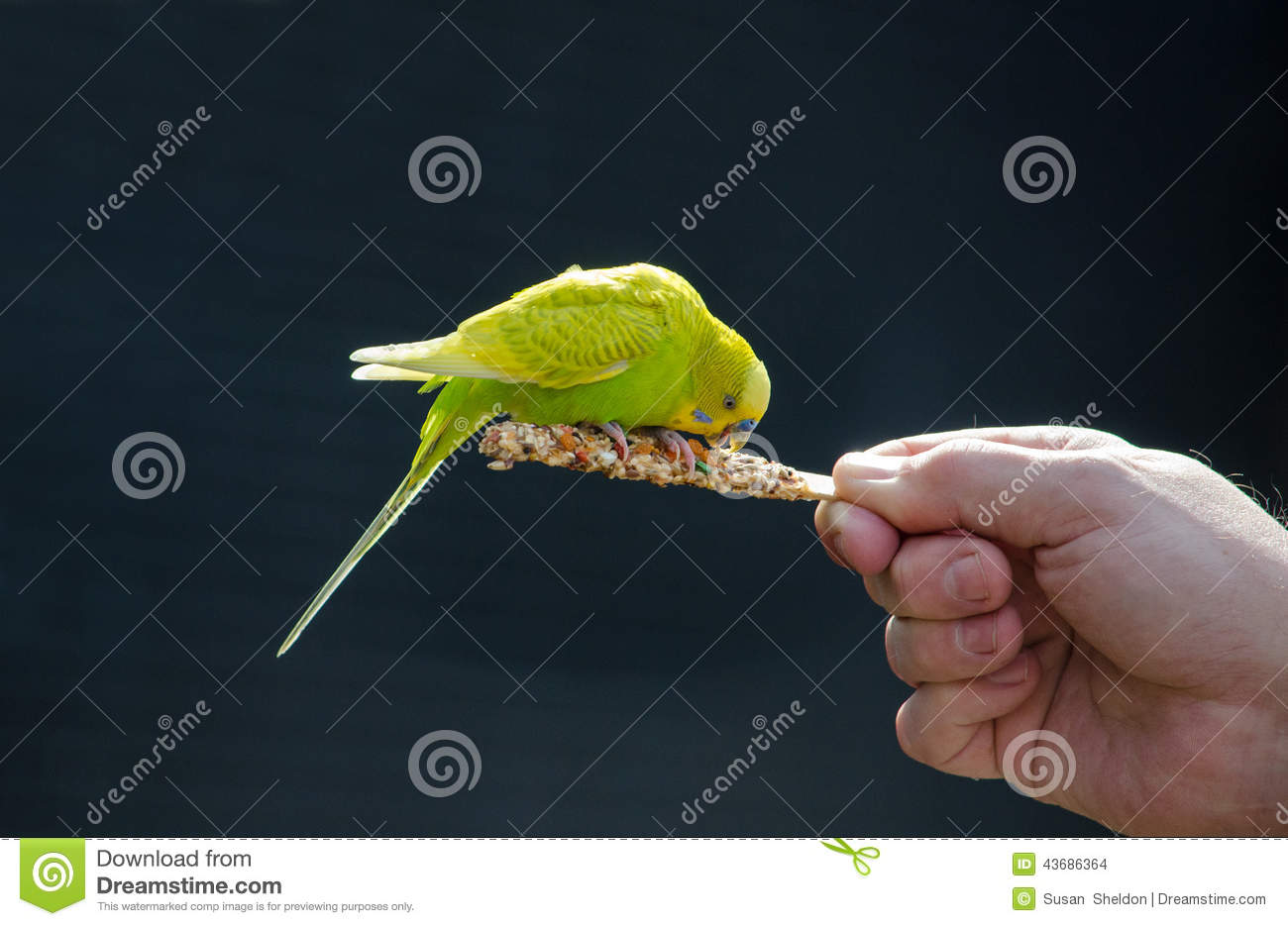 Bird On A Stick Eating Food Stock Photo - Image of fingers